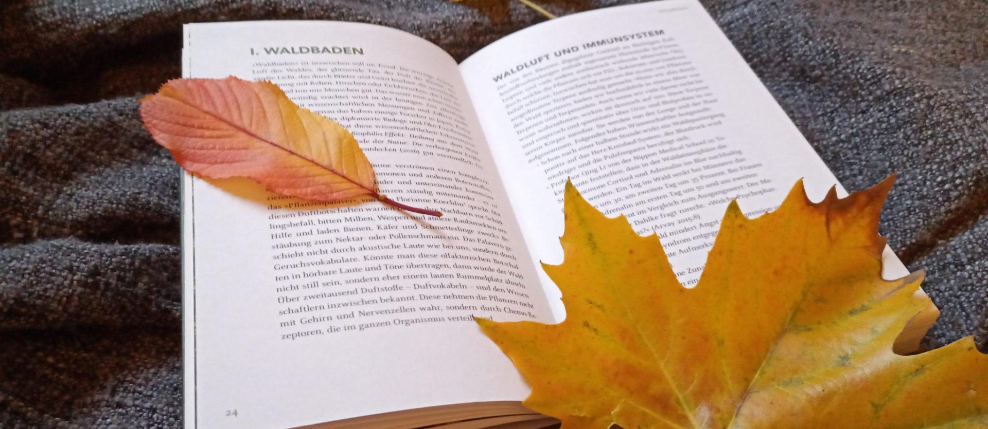 Beitragsbild Bücher für kalte Tage