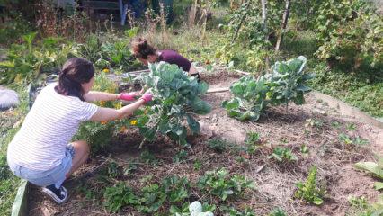 Beet mit Gemüsepflanzen